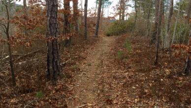white twister mountain bike trail