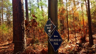 harbison state forest mountain biking